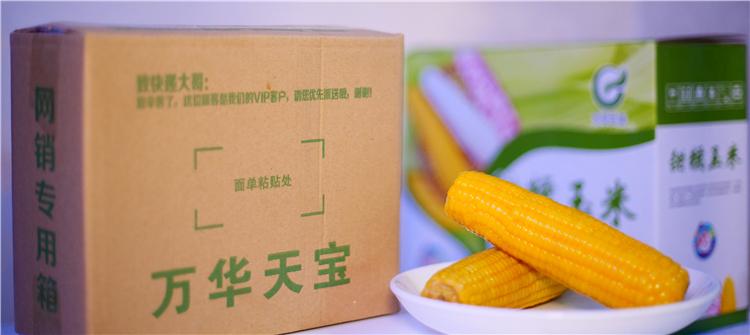 張家口速凍甜糯玉米