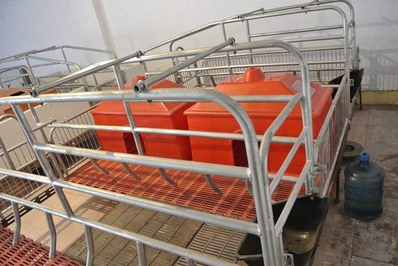 豬用保育床養殖設備生產商家
