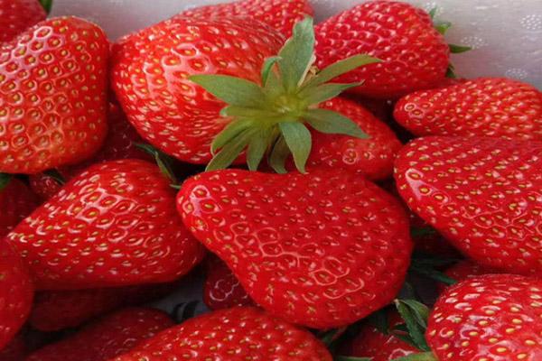 圣诞红草莓