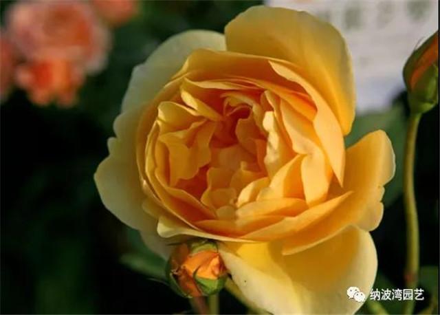 父爱如山,送一束花瞬间让他不淡定了!