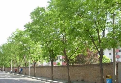 锦州绿化苗木