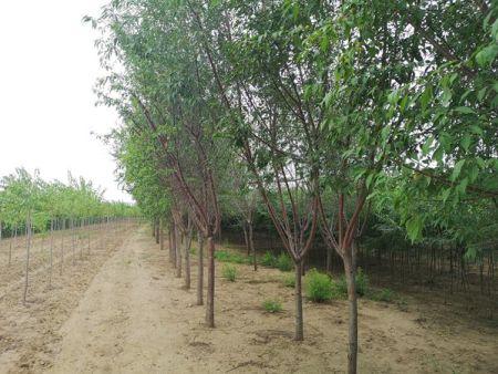 铁岭园林绿化