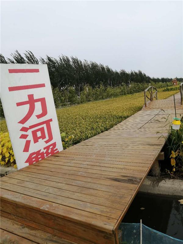 盘锦稻田河蟹价格