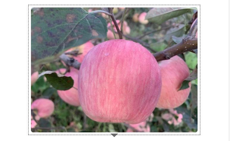 秋季采摘节
