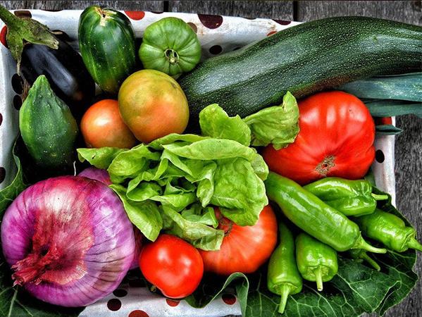 沈陽蔬菜配送