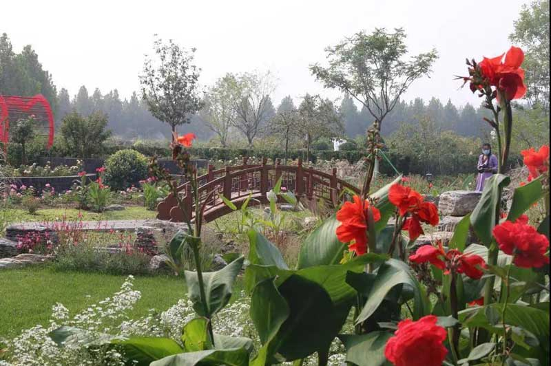 """17天,165名工匠,33座月季主题花园亮相VIP快速通道,""""十一""""等您来赏"""
