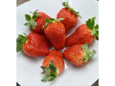 山东甘露草莓苗