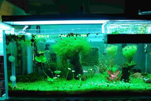 西安玻璃魚缸