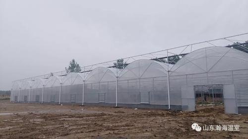 在寒冷的冬季,温室大棚如何才能做到光温协调?