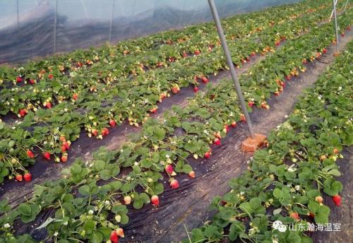 哪些因素会影响蔬菜种植呢