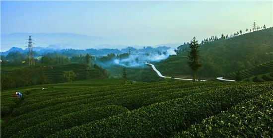 雅安市雨城区现代农业发展工程数字农业(茶园)项目