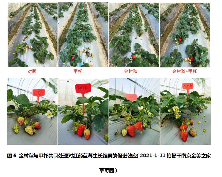 提高植物抗病性