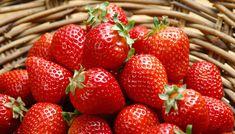 湖南红颜草莓苗