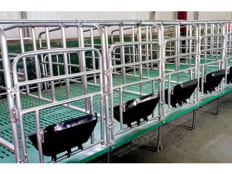 复合型母猪限位栏
