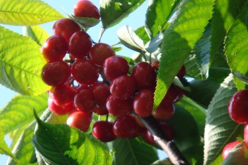 植物纖維基地膜投產 可明顯減少農藥使用