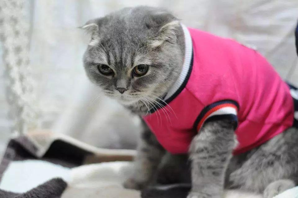 宠物食品厂家解读冬季是否给宠物穿衣服