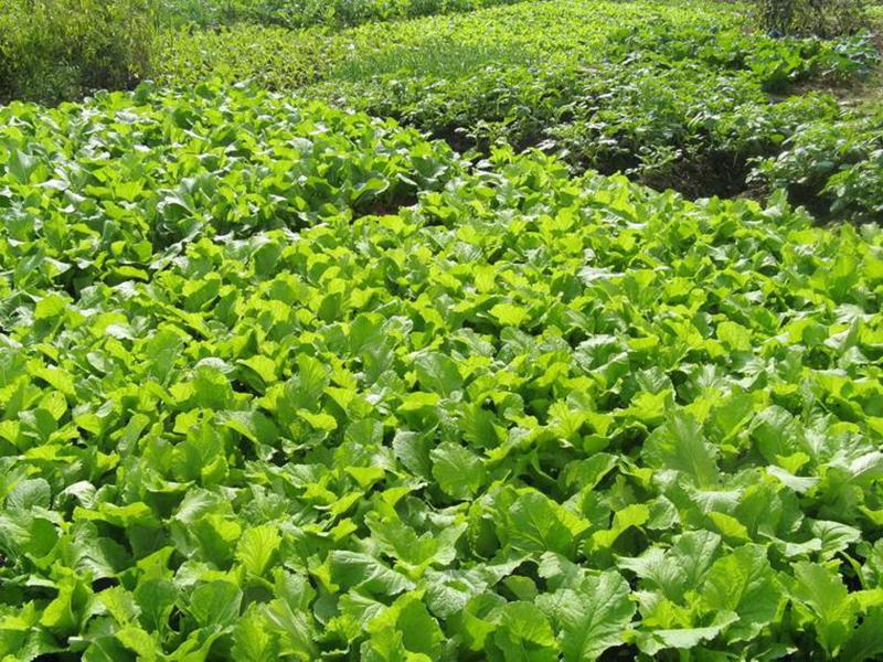 生物菌肥的正确施用方法