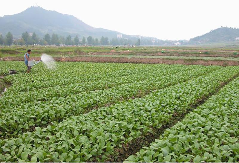 化肥与有机肥的区别在哪?