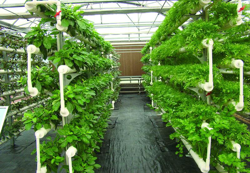 微生物肥料的作用原理