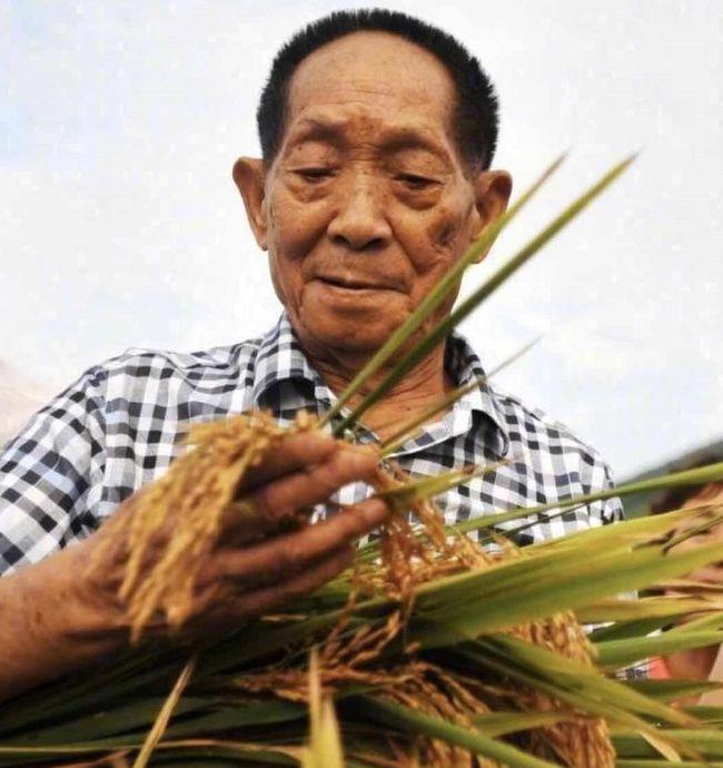 杂交水稻之父
