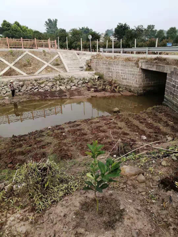 重慶永川花卉河道生態修復
