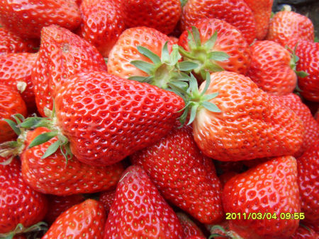沈阳脱毒草莓苗