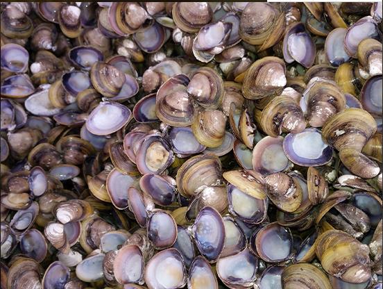丹东贝壳粉价格