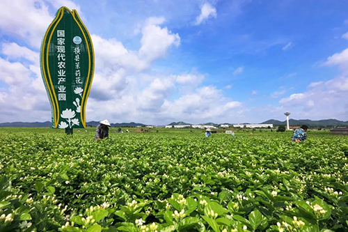 現代農業產業園