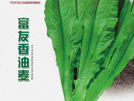 沈阳蔬菜种子