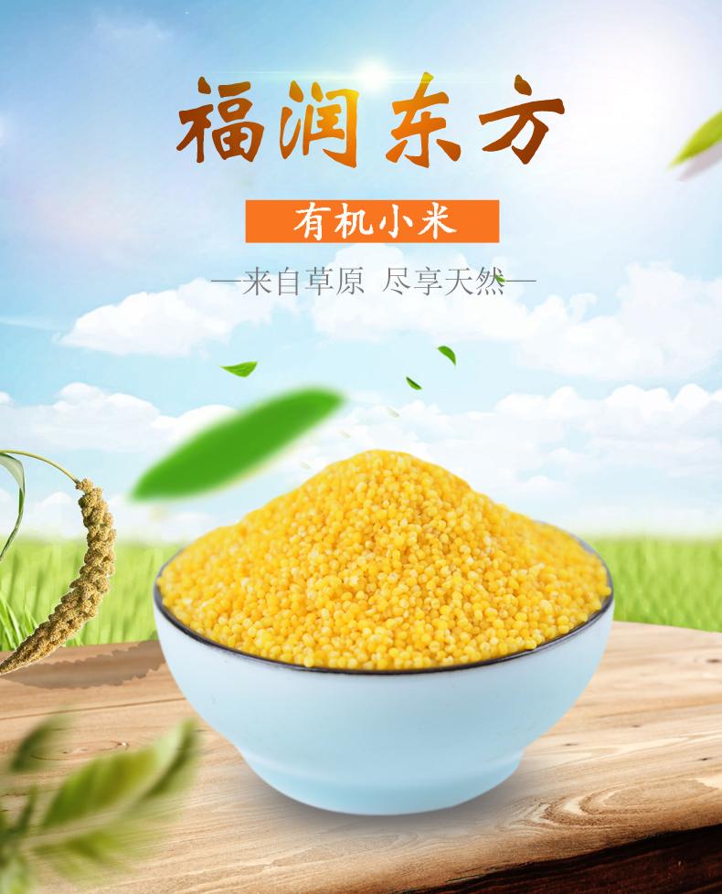 大金苗有機小米